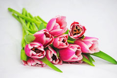 A bunch of tulips Stock Image