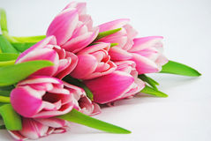 A bunch of tulips Stock Images