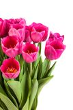 Bunch of tulips on a white Royalty Free Stock Photography