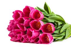 Bunch of tulips on a white Stock Photography