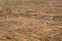 A bunch of twigs and tree roots on the shore of the lake stock photo