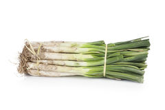 Bunch of uncooked fresh calçots Royalty Free Stock Photo