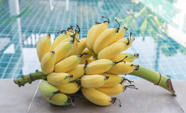 Bunch of unripe yellow cultivated bananas Stock Photo