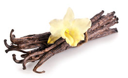 Bunch of vanilla sticks and orchid flower. Royalty Free Stock Images