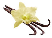 Bunch of vanilla sticks and orchid flower on white background. F Stock Photos