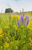 Bunch of Veronica spicata flowers on the meadow Stock Images