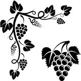 Bunch of vine. And corner with grapevine stock illustration