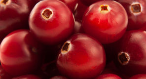Bunch of vinous cranberries. Close-up royalty free stock photos