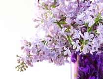 Bunch of violet lilac Royalty Free Stock Images