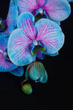 Bunch of violet orchids Stock Photography