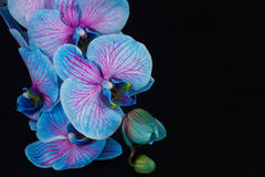 Bunch of violet orchids Stock Photos