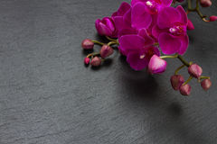 Bunch of violet orchids Stock Images