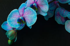 Bunch of violet orchids Royalty Free Stock Photos