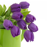 Bunch of violet tulips Royalty Free Stock Photo