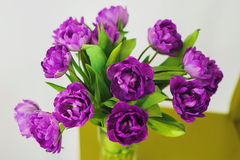 Bunch of violet tulips in the glass. Violet tulips in the vase on the green chair Stock Image