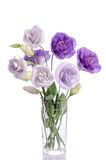 Bunch of violet and white eustoma flowers in glass vase Stock Image