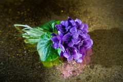 Bunch of violets covered with droplets. On a gold mirror Stock Image