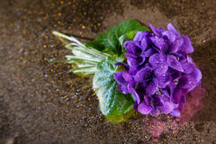 Bunch of violets full of droplets. Lots of droplets on purple and Stock Photography