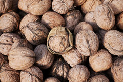 Bunch of walnuts Royalty Free Stock Photos