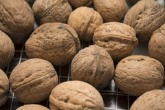 A bunch of walnuts Royalty Free Stock Image