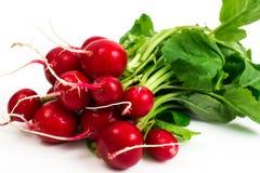 Bunch of washed fresh red radish, isolated on white background Stock Photography