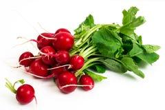 Bunch of washed fresh red radish, isolated on white background Royalty Free Stock Photo