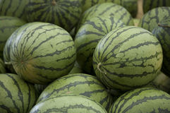 Bunch of Watermelons Royalty Free Stock Photo