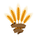 Bunch of wheat, barley or rye ears. Stock Image