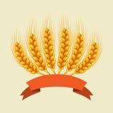 Bunch of wheat, barley or rye ears Stock Image