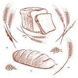 Bunch of wheat ears and bread hand drawn vector illustration in vintage engraving style, bakery sketch icons Stock Images