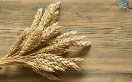 Wheat on wooden rustic background. top view with copy space Stock Images