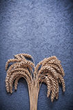 Bunch of wheat and rye ears food and drink concept Stock Image