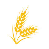 Bunch of wheat or rye ears with whole grain, vector. Bunch of wheat or rye ears with whole grain and leaves, yellow crop harvest symbol or icon isolated on white royalty free illustration