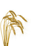 Bunch of wheat spikes, isolated Stock Photos