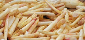 Bunch of white asparagus freshly picked white for sale at Stock Photos