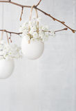 Bunch of white baby's breath flowers (gypsophila) in eggs shell. royalty free stock images
