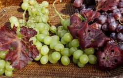Bunch of white and black grapes in wicker basket in the autumn Royalty Free Stock Photo