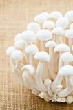Bunch of white bunapi beech mushroom. Stock Photos