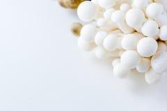 Bunch of white bunapi beech mushrooms or shimeji mushrooms Royalty Free Stock Photo