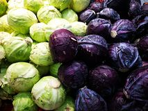 Bunch of white cabbage and red cabbage. For sale in the market royalty free stock image