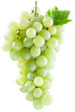Bunch of white grapes. Royalty Free Stock Photography