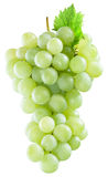 Bunch of white grapes. Royalty Free Stock Image