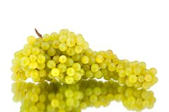 Bunch of white grapes on a white mirror background with reflection isolated close up stock photos
