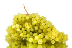 Bunch of white grapes on a white mirror background with reflection isolated close up royalty free stock photography