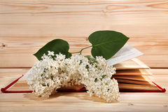 Bunch of white lilacs and open book on wooden background Royalty Free Stock Photos