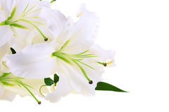 Bunch of white lilies Stock Photography