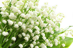 Lily of the valley. Royalty Free Stock Images