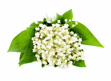 Bunch of white lily of the valley Stock Images