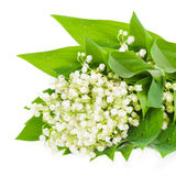 Bunch of white lily of the valley Stock Photos