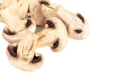 Bunch of white mushrooms close up. Stock Photos